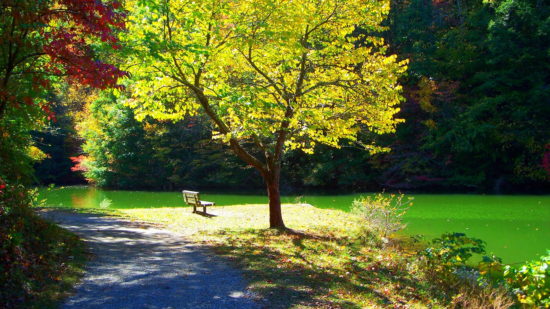 Steele Creek Park Poisonous Flora And Fauna At Bristol Public